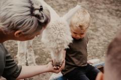 lapakatal-familienshooting-mit-alpakas-fotos-von-aline-egerding-fotografie05