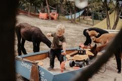 lapakatal-familienshooting-mit-alpakas-fotos-von-aline-egerding-fotografie07